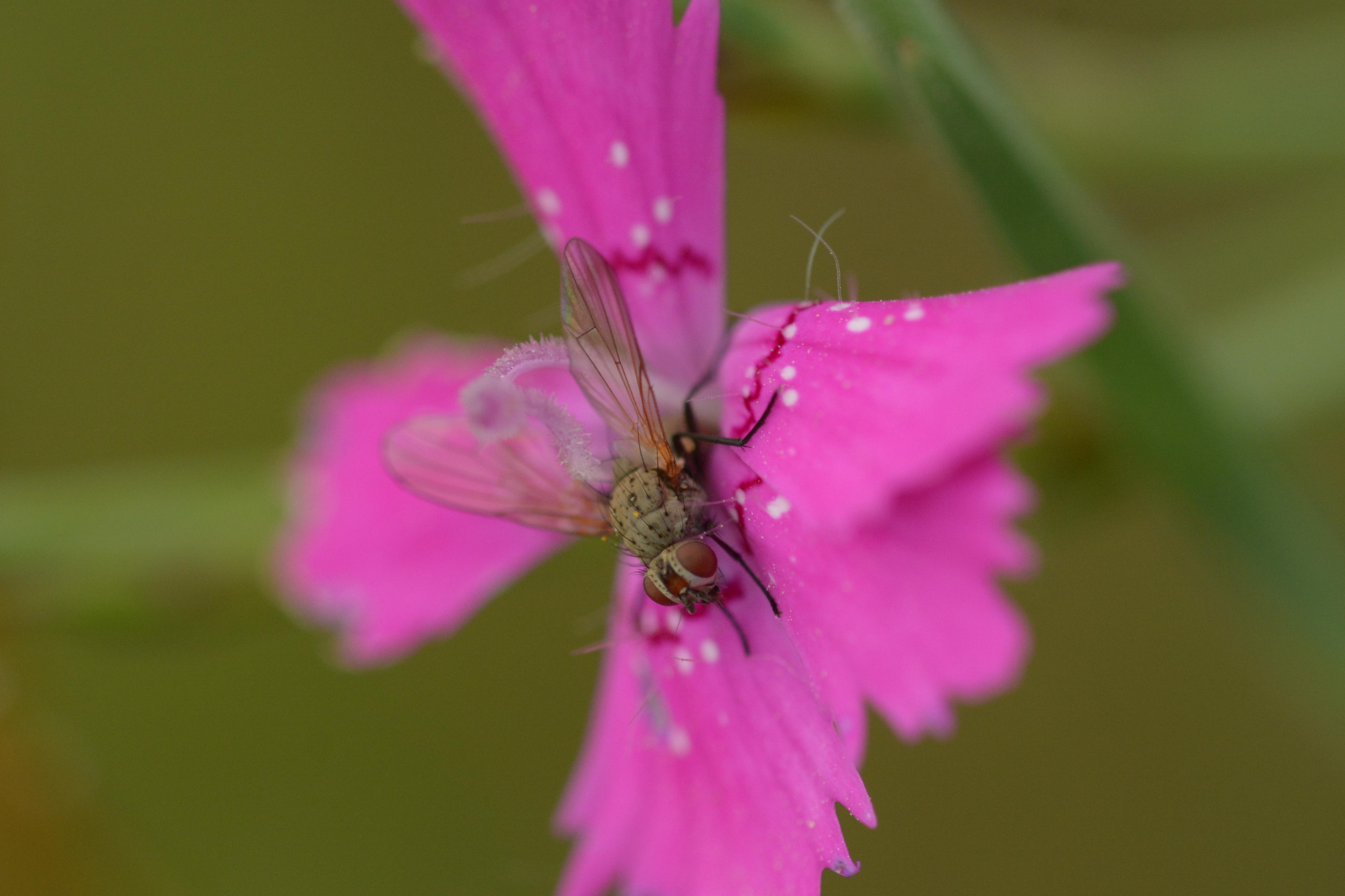 www.naturalis-historia.de/bilder/temp/DSC_5799.JPG