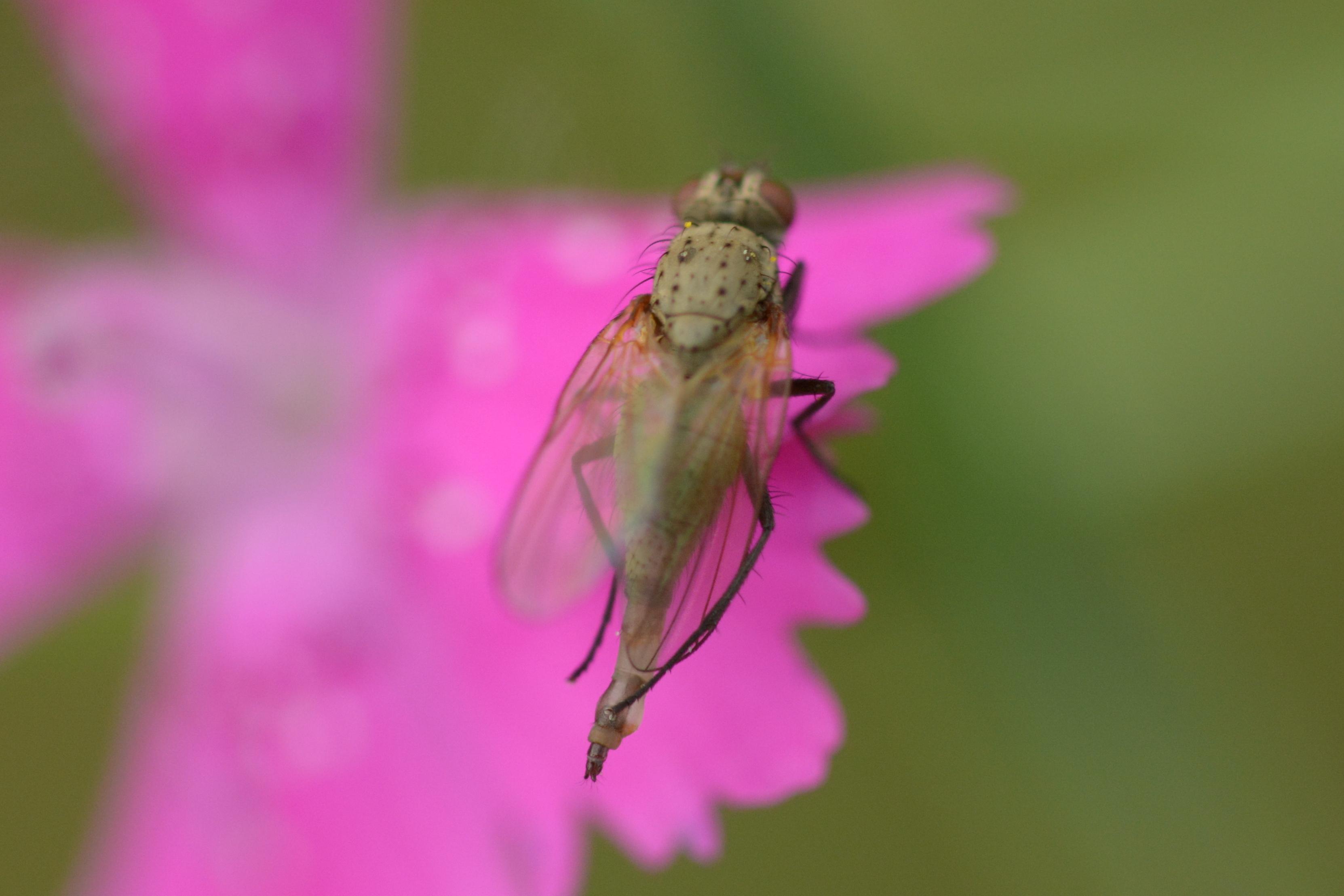 www.naturalis-historia.de/bilder/temp/DSC_5812.JPG