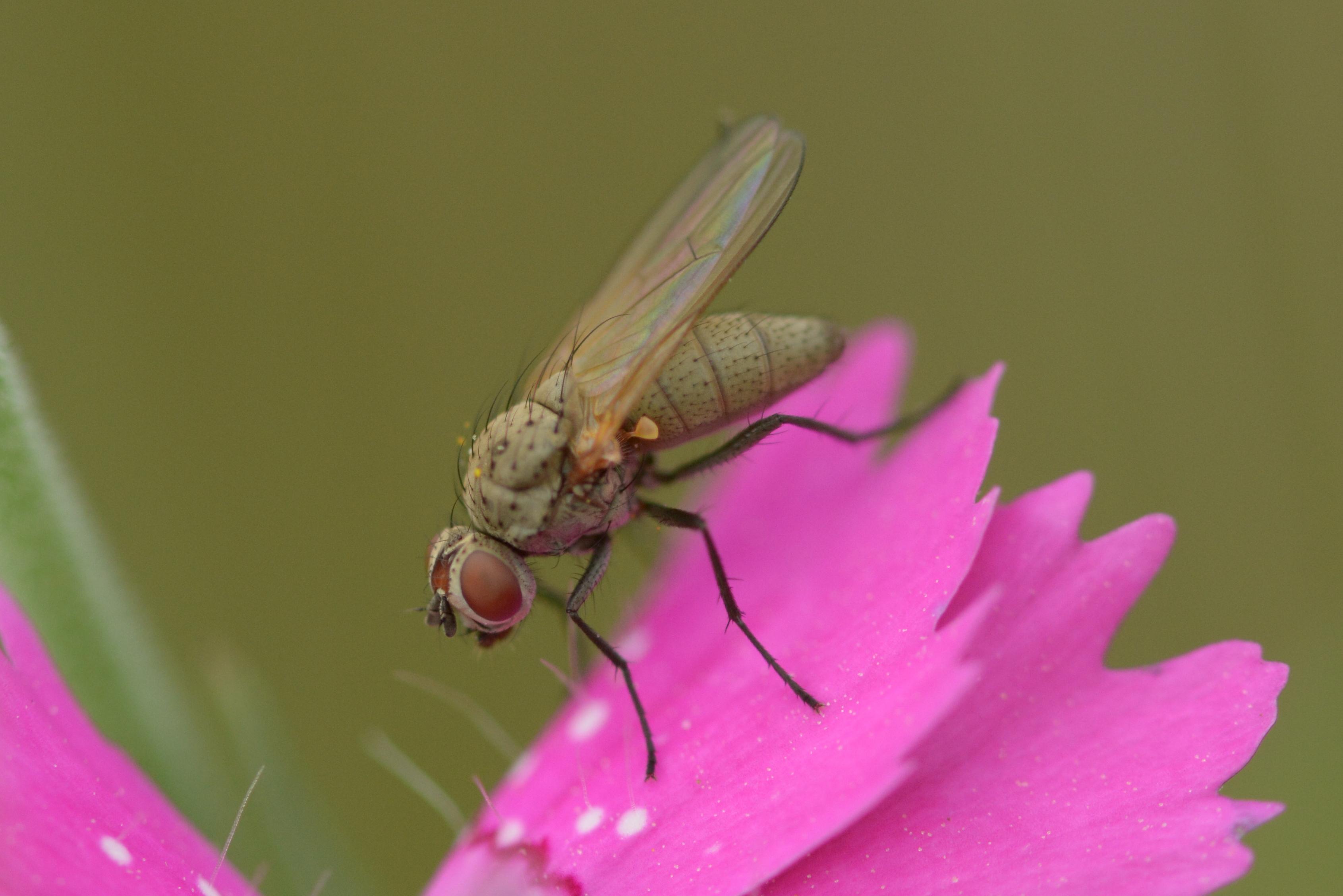 www.naturalis-historia.de/bilder/temp/DSC_5818.JPG