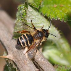 besiedeln hornissen altes nest wieder
